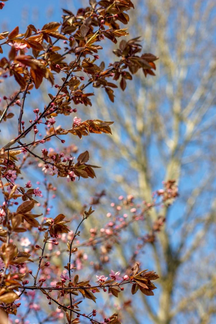 wiosna 2